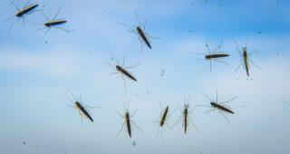 Tegen muggen